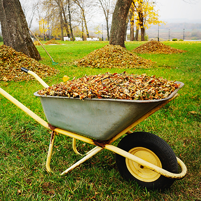A wheelbarrow full of fall leaves.