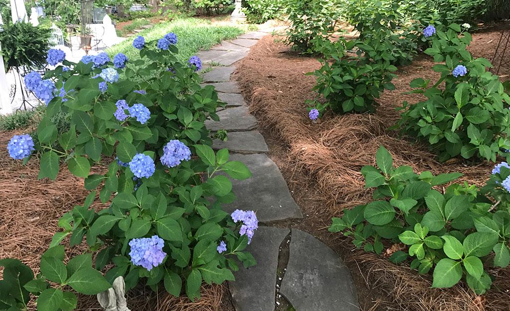 Make a Garden Path