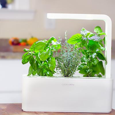 7 Tips to Grow Plants Under Grow Lights