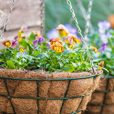 7 Unexpected Plants for Hanging Baskets