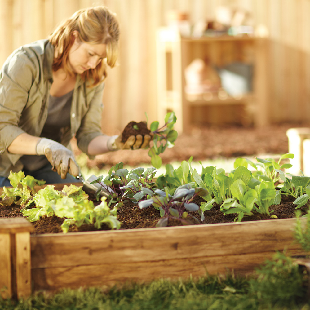 Gardener planting vegetables in a raised bed
