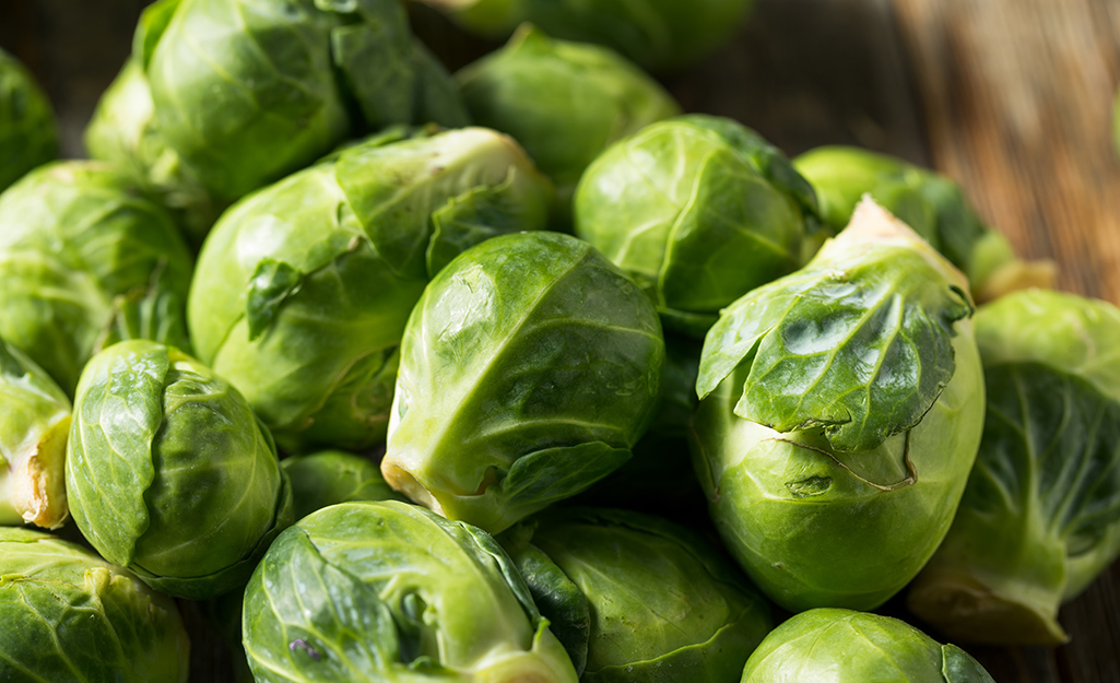 Brussels sprouts from the garden