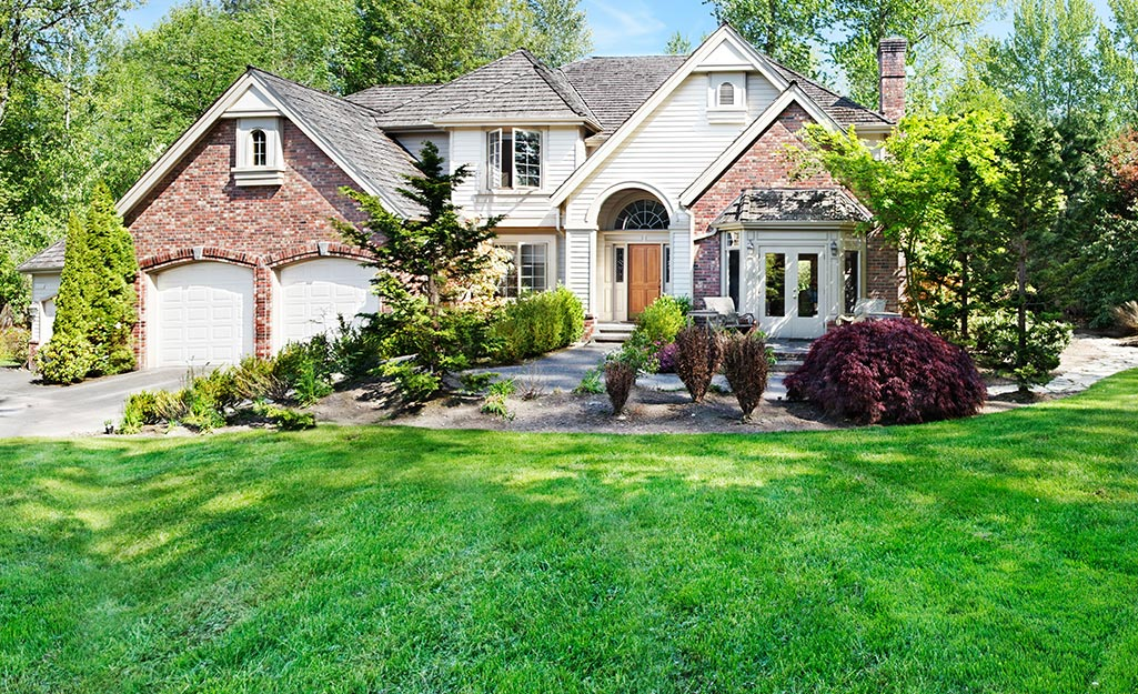 A thick, healthy lawn in a landscape