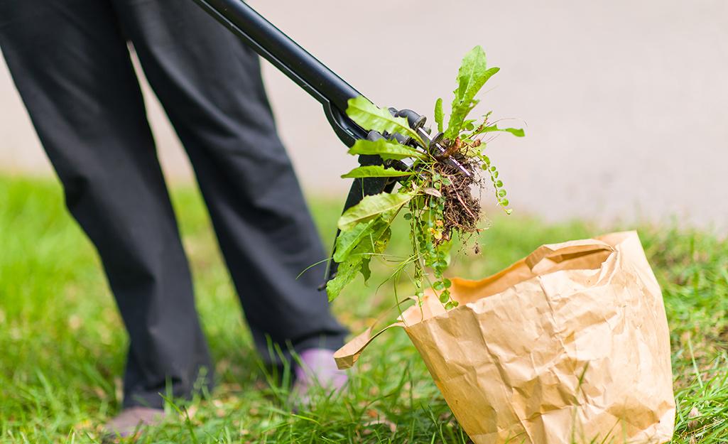 Disposing of weeds in a bag