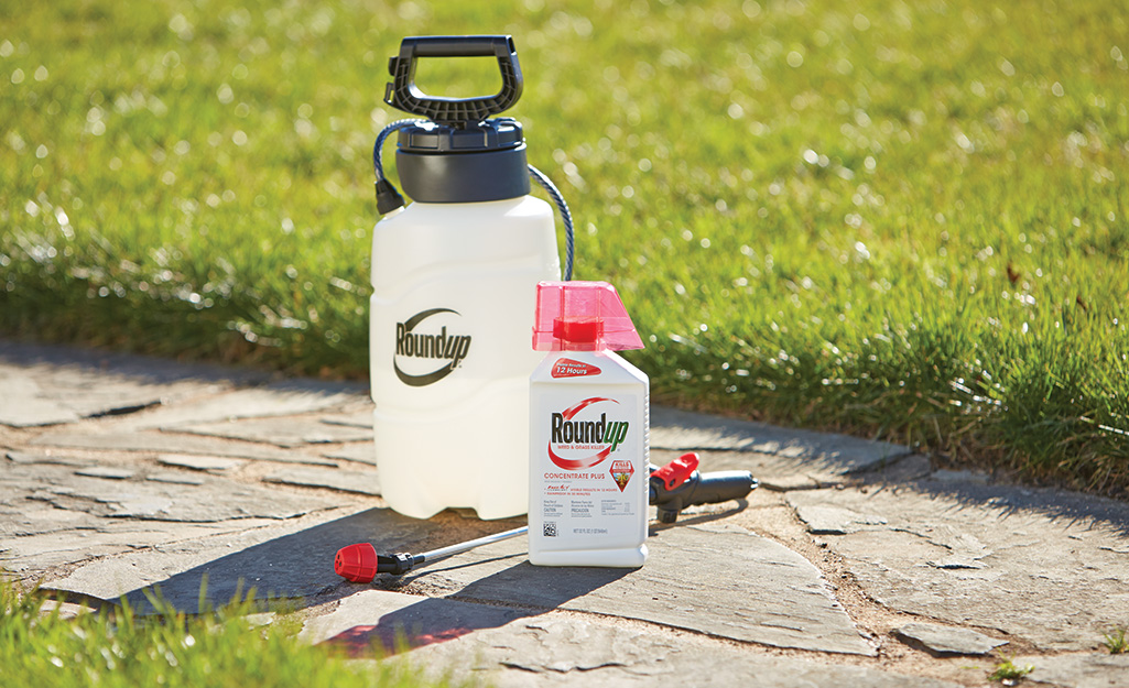 Weed control products in lawn