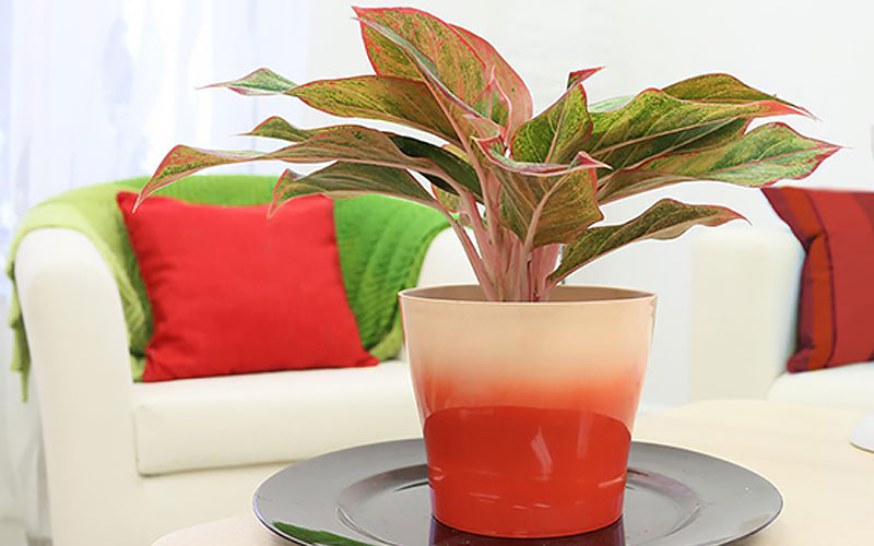 Best Indoor Plants for Spring - The Home Depot on wrightsville house, american girl house, easy clean house, beach house, home small modern house, fluff house, palladium house, gearhead house, topper house, anthem house, the rat house, average house, perfect house, actual house, dibs house, uncomfortable house, reliance house, mattel house, idea house, immense house,