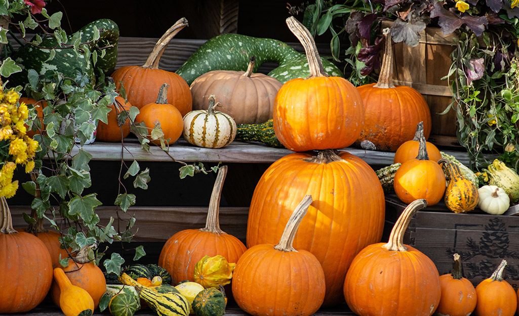 Stacks of live pumpkins and gourds.