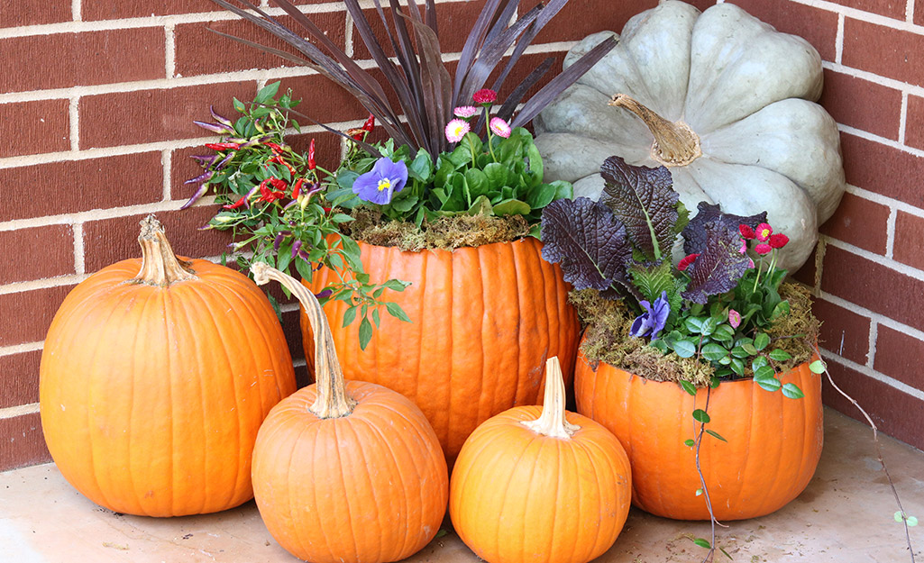 A display of live pumpkins and carved pumpkin planters on a porch.