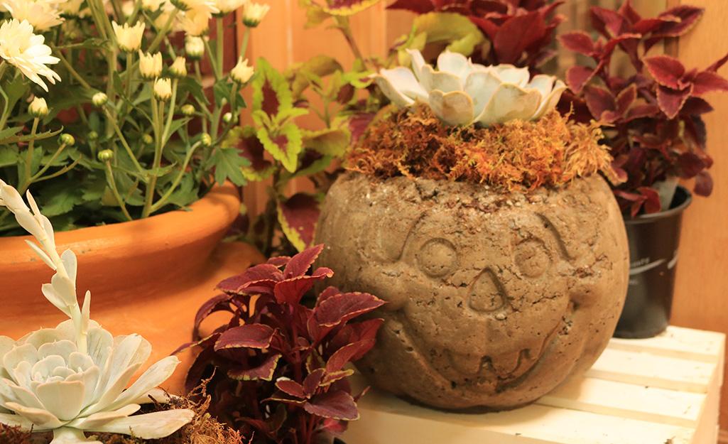 A display of fall plants with a hypertufa Jack-o'-lantern.