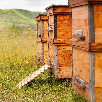 9 Tips for Starting a Backyard Beehive
