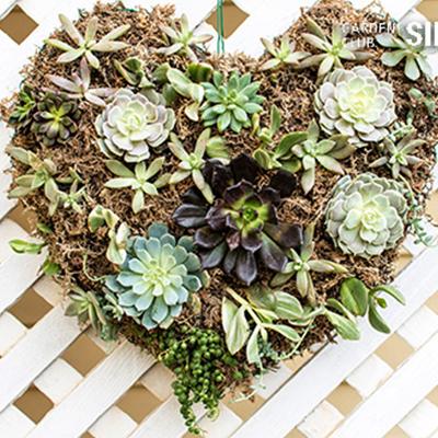 Celebrate Love: DIY Succulent Heart