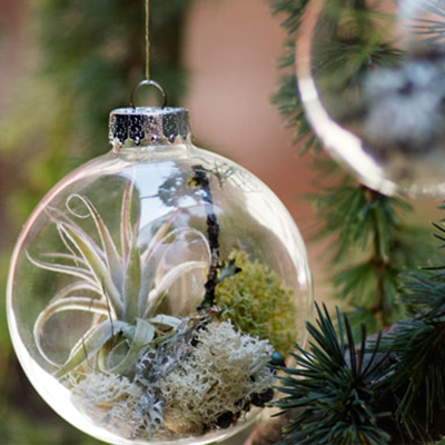 Christmas Decorating Made Simple with Air Plants