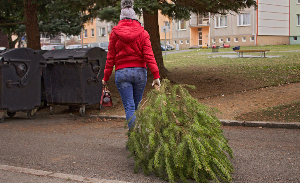 A person dragging a Christmas tree to a collection bin.