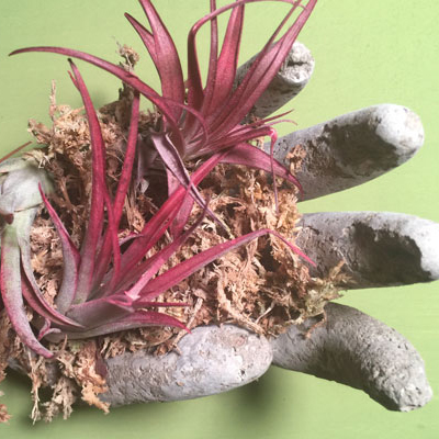 Create a Hypertufa Cement Planter in the Shape of a Hand
