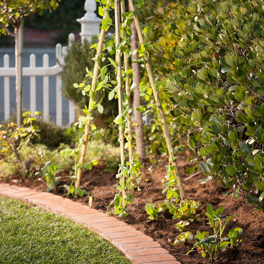 DIY Veggie Garden Trellis