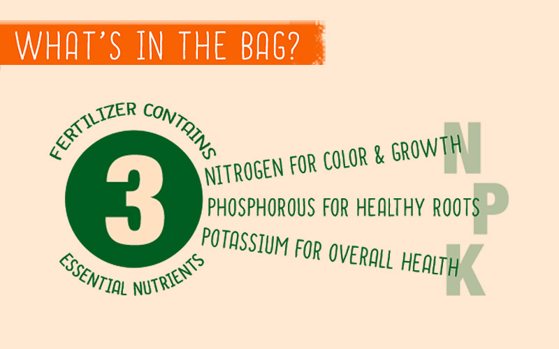 Tips for Fall Fertilization Infographic