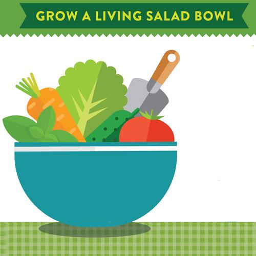 Grow a Living Salad Bowl