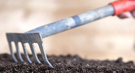 Preparation location - Grow a Wildflower Garden