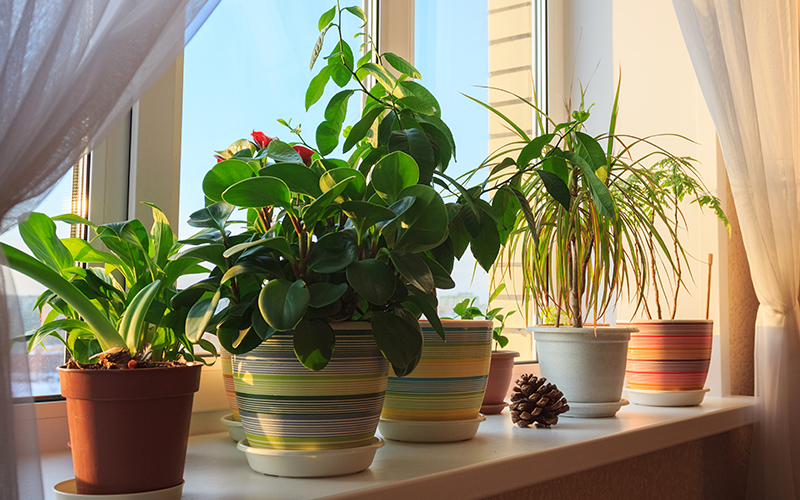 A group of houseplants in colorful pots near a window.