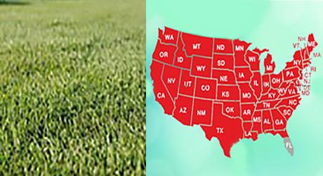 Rye grass/Rye grass map