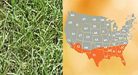 Bermuda grass/Bermuda grass map
