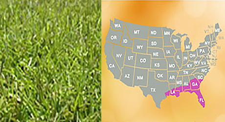 Centipede grass/Centipede grass map