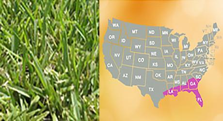 St Augustine grass/St Augustine grass map