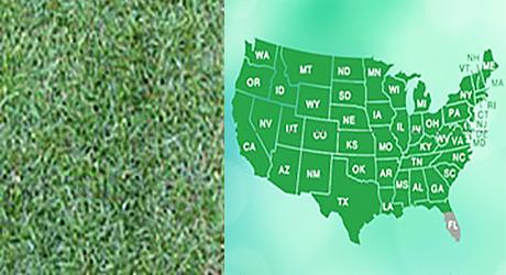 Fescue grass/Fescue grass map
