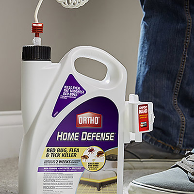 Person treating home with flea spray to prevent infestation
