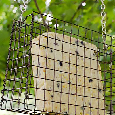 Make a Suet Bird Feeder
