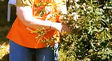 Prune the center - Prune Hybrid Tea or Shrub Rose