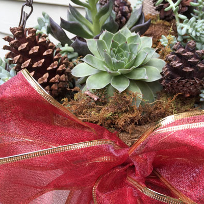 Make a Festive Holiday Hanging Basket with Succulents