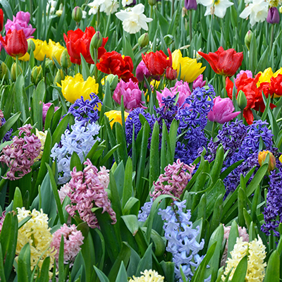 Now is the Time to Plant Fall Bulbs