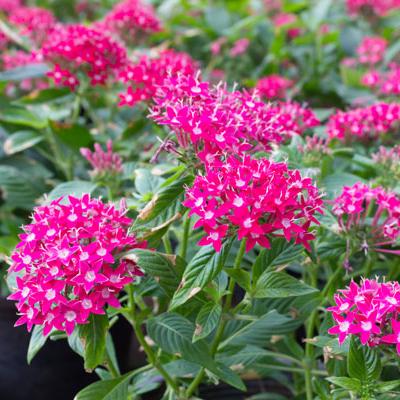 plant-perennials-in-your-south-florida-garden-hero