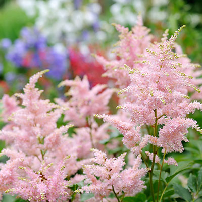Plant Perennials in Your Southern Garden