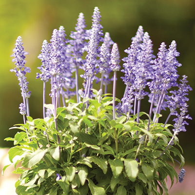 Plant These Top Summer Bloomers Now
