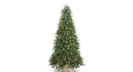 Colorado - Live Christmas Trees