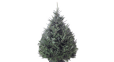 8c91ffa76f8 Best Real Christmas Trees for You - The Home Depot
