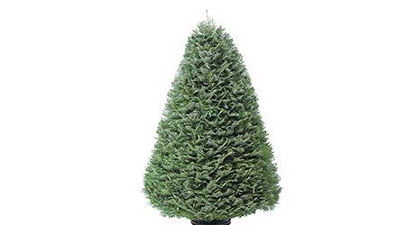 Grand - Live Christmas Trees