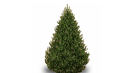 How To Keep Cats Off Christmas Trees.Best Real Christmas Trees For You The Home Depot