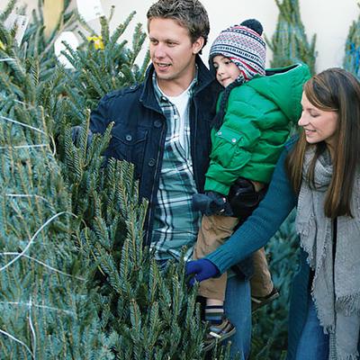 Christmas Trees - Live Christmas Trees