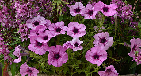 Celebrate Spring with Easy Annuals