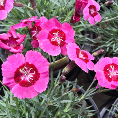 Spring Comes Early with Colorful Annuals