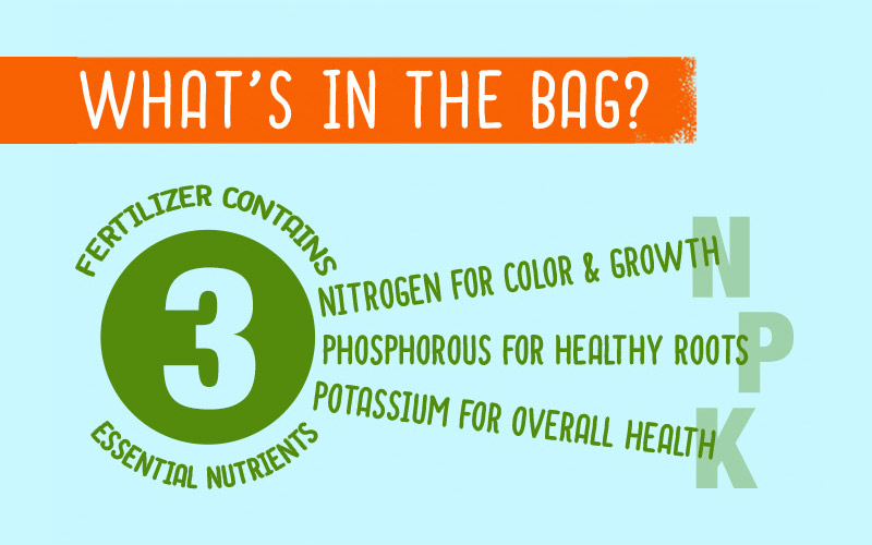 Infographic What's in the Bag