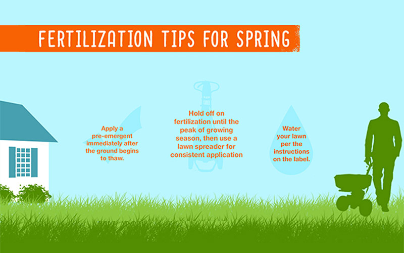 Infographic Fertilization Tips for Spring