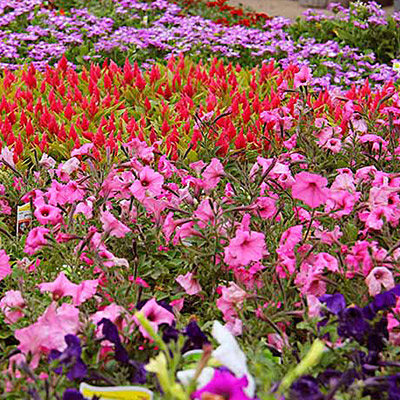 Types Of Spring Flowers The Home Depot