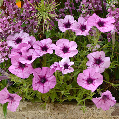 Top 5 Flowering Annuals to Add Spring Color