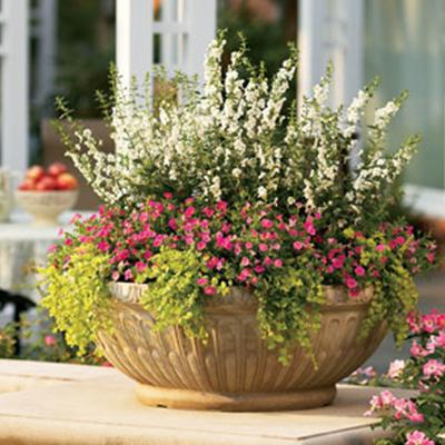 top-tips-successful-container-gardening-hero