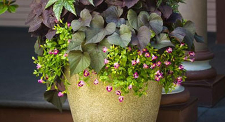 top-tips-successful-container-gardening-image-3