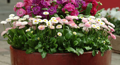 top-tips-successful-container-gardening-image-4